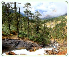 places to visit in sikkim - Lachung